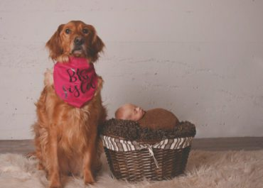 How to include your furbaby at your Newborn Photoshoot